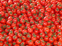 Почему помидоры на наших прилавках «пластмассовые»?