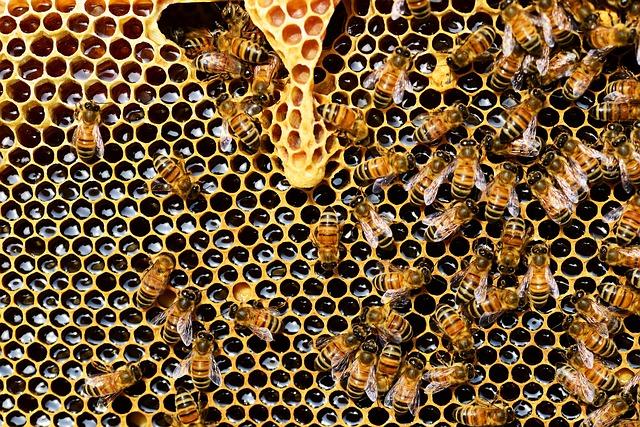 Как легко сбросить лишний вес с помощью мёда